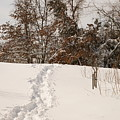 Christmas Snow Trail by Heidi Poulin