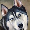 Husky  by FayBecca