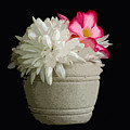 Desert Rose   Chrysanthemum And Adenium Obesum by Allan  Hughes