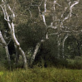 Dv Creek Trees by Karen  W Meyer