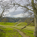 East Ridge Trail Spring by Karen  W Meyer
