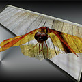 Eastern Amber Dragonfly 3d by Donna Brown
