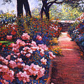 English Tea Roses by David Lloyd Glover