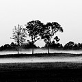 Evening Mist Black And White by Expressionistart studio Priscilla Batzell