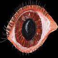 Eye by Bethwyn Mills