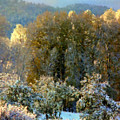 First Snow And Bosque Glow by Anastasia Savage Ealy