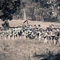 Gettysburg Confederate Infantry 9270s by Cynthia Staley