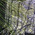 Grass And Stone  by Viktor Savchenko