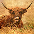Happy Highlander by Linsey Williams