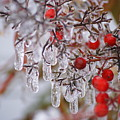 Holiday Ice by Heidi Poulin