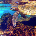 Honu On The Reef by Bette Phelan