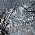 Ice Storm On The 6th II by Jacqueline Russell
