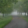 Knox Fog 6038 by Guy Whiteley