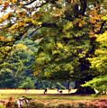 Landscape Under A Big Oak In Autumn by Linsey Williams