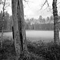 Liesilampi 3 by Jouko Lehto