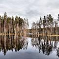Liesilampi Panorama by Jouko Lehto