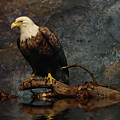 Magestic Eagle  by Elaine Manley