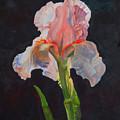 Majestic Iris by Heidi E  Nelson