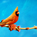 Male Northern Cardinal Perched On Tree Branch by Laura D Young