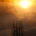 Mist And Lake Reeds At Sunrise by Irwin Barrett