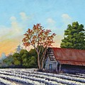 Montmorenci Cottonfield by Jerry Walker