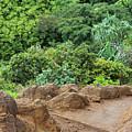 Muddy Kalalaua Trail - Kauai by Rupali Kumbhani