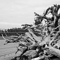Natures Own Wood Sculpture by HW Kateley