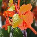Orange Bright by Maureen J Haldeman