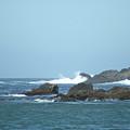 Pacific North Coast by Hazel Rice