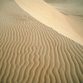 Pismo Dunes by Tracy Knauer