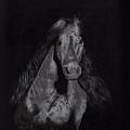 Realistic Horse by Chethan Kumar KM