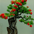 Red Berried Bonsai by Erin Rednour