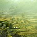 Rice Terrace  by Gusti putu  Suarsana