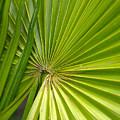 Spiny Fiber Palm by Jouko Lehto
