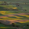 Steptoe Butte 10 by Tracy Knauer