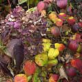 Sublime Autumn Spectrum by Terrance De Pietro