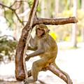 Swinging Monkey by Dara Gor