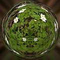 This Little Anemone  Planet 4 by Jouko Lehto