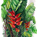 Tiger Claw .. Heliconia by Karin  Dawn Kelshall- Best