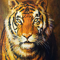 Tiger Head, Color Oil Painting On Canvas. by Jozef Klopacka