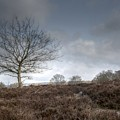 Tree On The Common  by Dave Godden