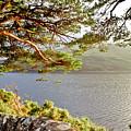 Warmth  Of The Pine Branch. by Elena Perelman