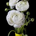 White Ranunculus In Yellow Vase by Garry Gay