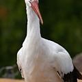 White Stork 4 by Jouko Lehto