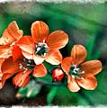 Wildflowers 5 -  Polemonium Reptans  - Digital Paint 3 by Debbie Portwood