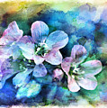 Wildflowers 5  -  Polemonium Reptans - Digital Paint 4 by Debbie Portwood