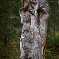 Wooden Face by Jouko Lehto