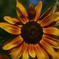 Yellow Sun Flower by Eric Noa
