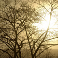 01 Foggy Sunday Sunrise by Michael Frank Jr