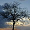 016 April Sunsets by Michael Frank Jr